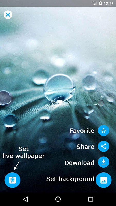 Android Dandelion Live Wallpaper Screen 7
