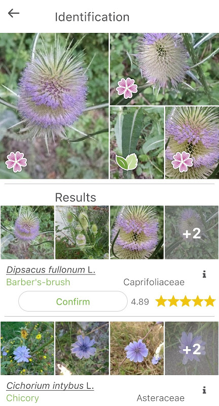 PlantNet Plant Identification 3.0.0 Screen 6