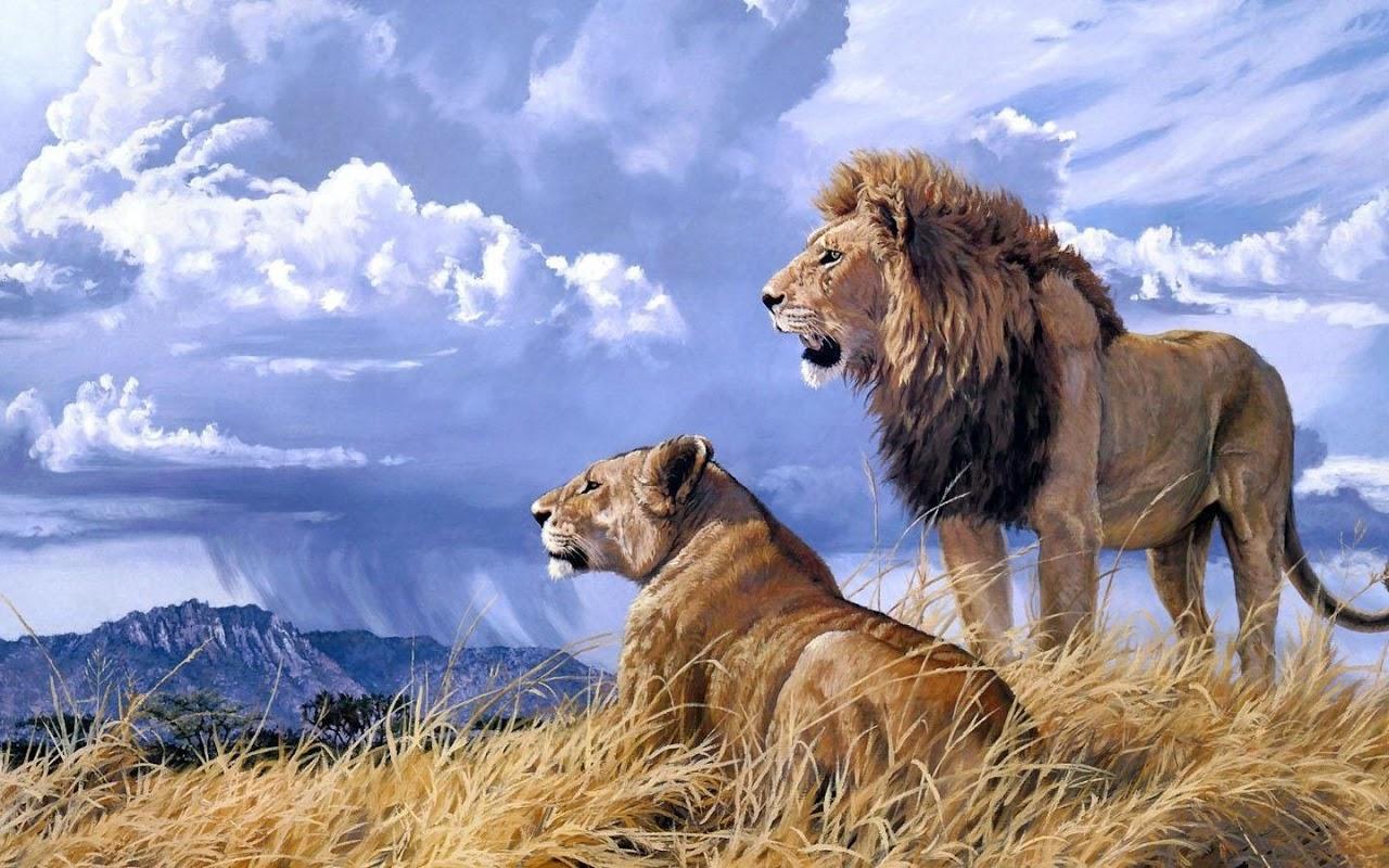 Lions HD Wallpaper 1.01 Screen 2