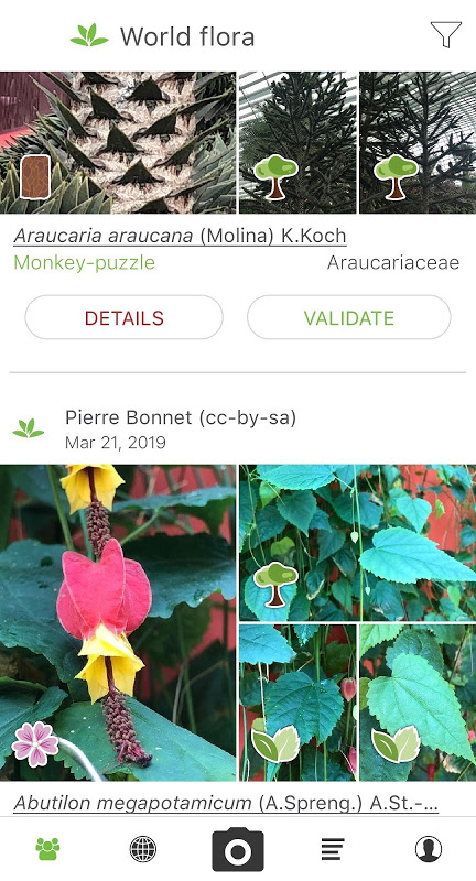PlantNet Plant Identification 3.0.0 Screen 3